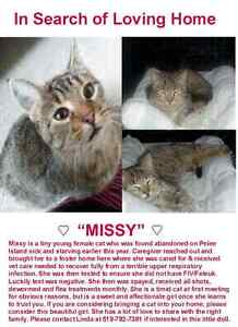 Female tabby cat looking for a furever home, Pelee Island rescue