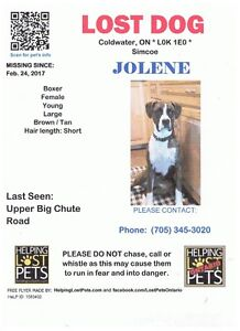 PLEASE HELP ME FIND JOLENE