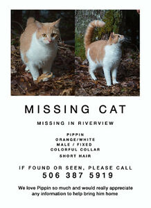 Orange/white Cat missing in Riverview