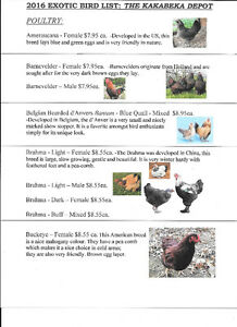 Exotic Chicks-Place your order today! Kakabeka Depot 628-0652