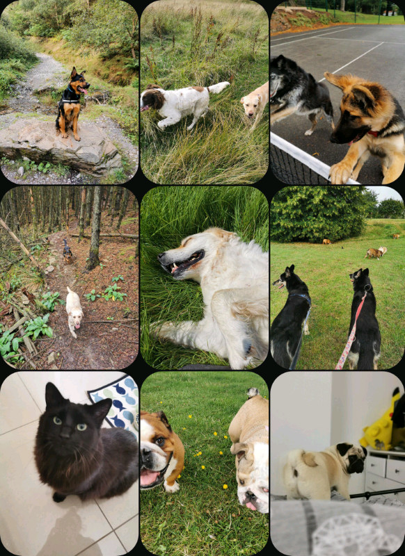 The pet sitter - dog walking, doggyday care, boarding and