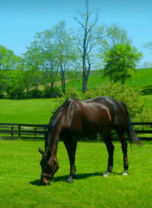 Looking For Pasture Board for 1-2 Horses