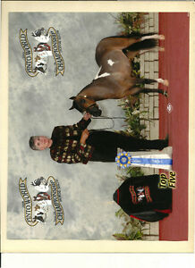 NEW PRICE!  Bay Pinto Miniature Horse Stallion for Sale