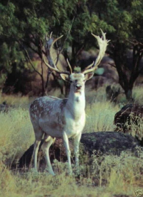 Trophy Hunt for FALLOW, AXIS, SIKA, RAM, or BLACKBUCK at The Wildlife Ranch