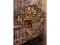 Canary smixed birds 70