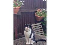 MISSING Cat! Beresford road/court