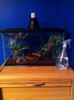 Crested geckos & 2 firevelly toads & white tree feog