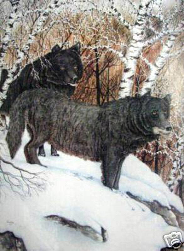 Alpha Pair  Black Wolves by Thomas Ellis