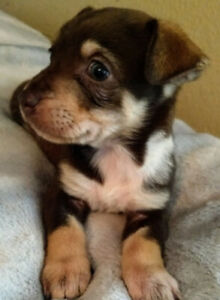 Asia - A Tiny Mite but SO Sweet