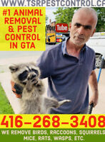TSR ANIMAL & PEST CONTROL, RACCOON, SQUIRREL, RAT, MOUSE REMOVAL
