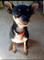 """Lost Chi  $REWARD """"HE CAN BE ANYWHERE NOW"""""""