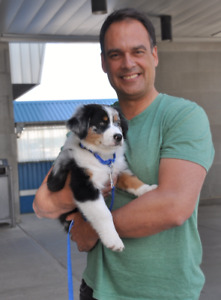 Good Reviews: Oakville Dog/Puppy Trainer