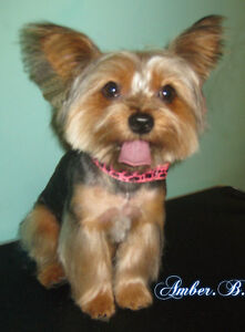 Dog Grooming In NW Bowness.