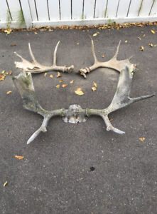 3 sets of Antlers
