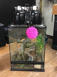 Reptile Enclosure Available Now!