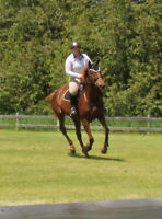 Special 4 Week  Intro To Riding/Grooming For Adults