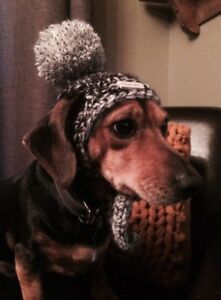 Knit The Change : Beanie for Pets - Cat and Dog - Handmade