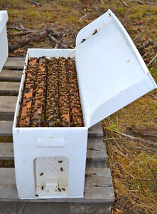Honey Bee Hives and Nucs