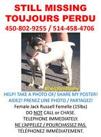 MISSING DOG / CHIEN PERDU - Jack Russell Terrier