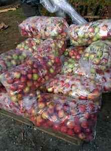 Pommes à chevreuil a vendre $7.00 le sac de 40 lbs 8192892101