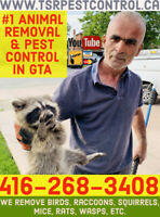 ANIMAL REMOVAL PEST CONTROL RACCOON SQUIRREL MOUSE RAT BED BUGS