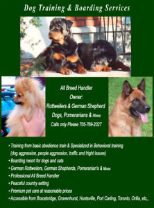 Dog training obedience or specialized in behavioral & boarding