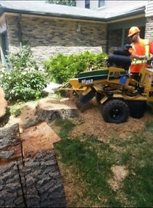 Ash tree removal ! Dangerous trees ? Call etree Oakville / Halton Region Toronto (GTA) image 8