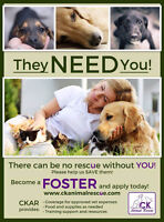 CHATHAM KENT ANIMAL RESCUE NEEDS YOUR HELP!