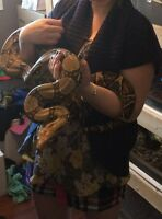 Female red tail boa almost 7ft