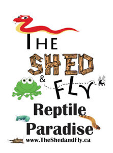 ALL Reptiles, ALL the time, @ The Shed and Fly!