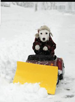 Fast and Affective Snow Removal