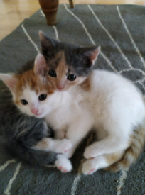 2 beautiful kittens left ALL SOLD