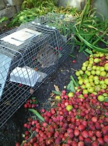 Live Animal Trap Rental - great for catching medium size animals