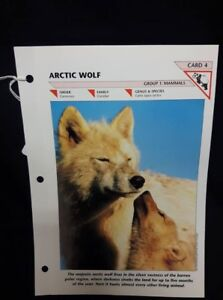 Artic Wolf Card #4
