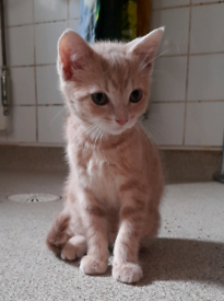 2 x Adorable female kittens