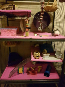 3 rats and cage