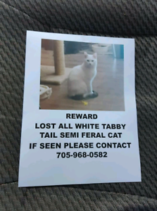 Lost from Petsave Lively 7056923319