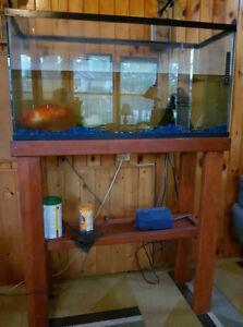 8 Inch Orange and White Koi Includes Aquarium and Stand