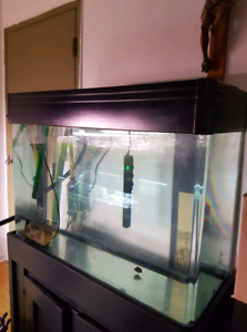 Gorgeous 90 gallons aquarium with rounded corners