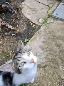Cat found in weston