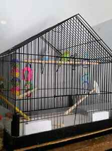 REDUCED PRICE!Two budgies for sale, male and female best friends