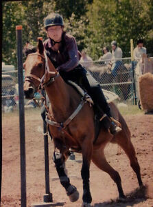All Around Barrel Mare for Sale Kawartha Lakes Peterborough Area image 4