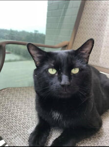 WOODY - MISSING SINCE JUNE 29TH TALWOOD AND WHITEFIELD ROAD AREA