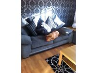 Beautiful 3/4 Staff, 1/4 French Mastiff
