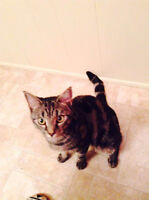 2 year old female cat to give away asap