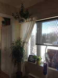 3 indoor Plants. Kenmore Portable AC & more...  Must sell ASAP!
