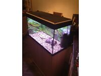Fluval 125 liter fish tank and stand for sale full set up