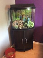 26 gallon bow front aquarium and stand