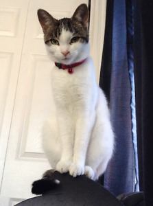 Rescue Cat For Rehoming