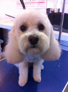 Professional Dog Grooming